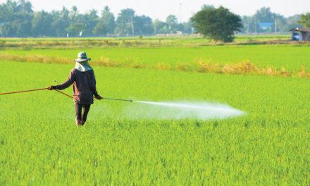 Jak insekticidy zabíjejí havěť?