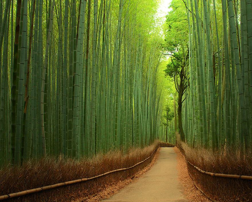bambusový les japonsko