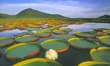 Takhle vypadá tropický ráj Brazílíe Pantanal