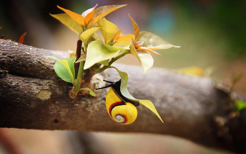Kuba je ostrov plný vzácných živočišných druhů