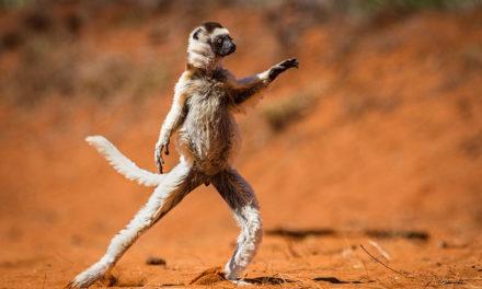 21 nejvtipnějších fotek zvířat, kterým se budete nahlas smát