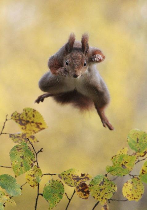 21 nejvtipnějších fotek zvířat