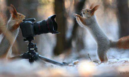 Jak se podařilo mladému fotografovi pořídit tyto úžasné fotky veverek?