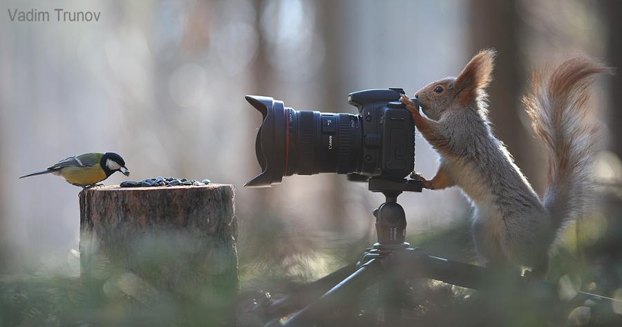 fotky veverek
