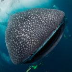 Žralok není vraždící monstrum, ale živočich s obdivuhodnou pamětí