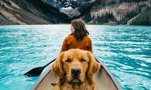 8 zvířecích cestovatelů, kteří procestovali větší kus světa než vy