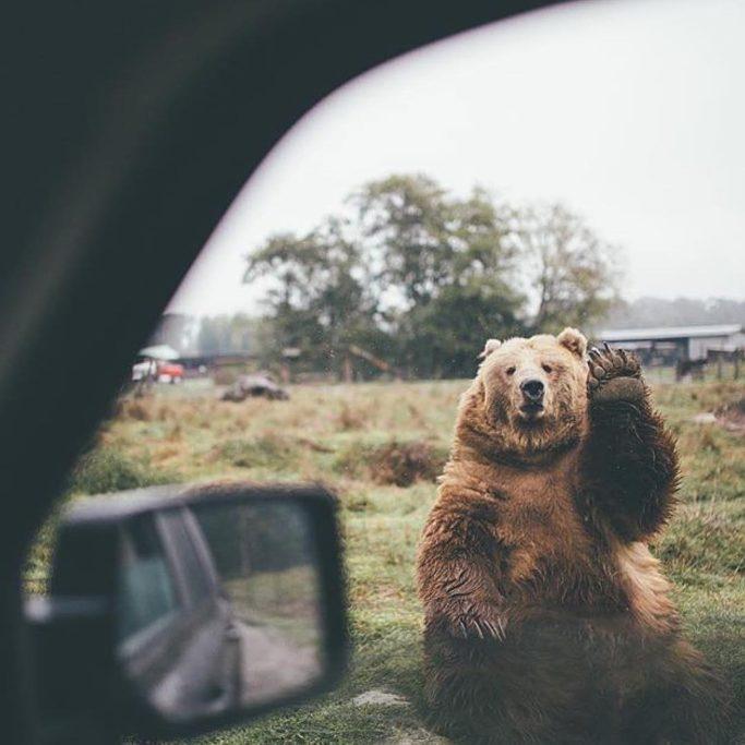 setkání zvířat a lidí