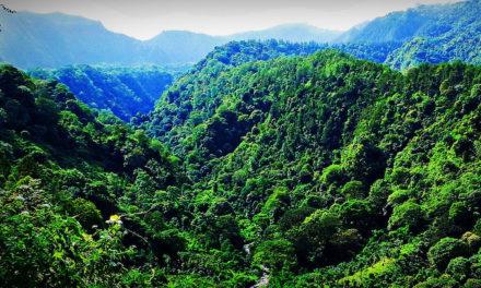 Nigérie masivně kácí své vzácné pralesy. Kdo za tím stojí?