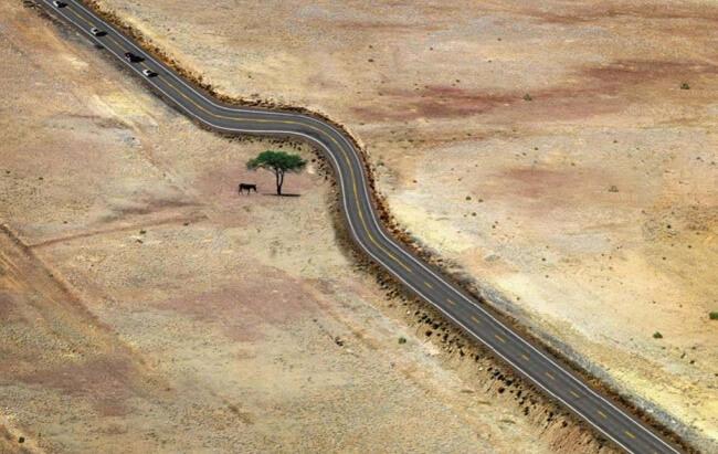 silnice strom