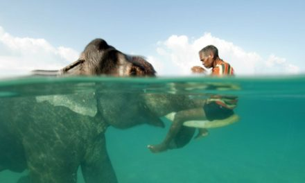 13 neskutečných setkání zvířat a lidí na jedné fotce