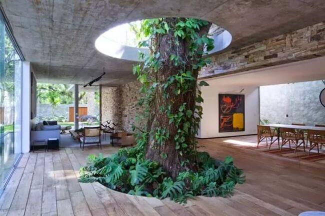 strom uprostred domu