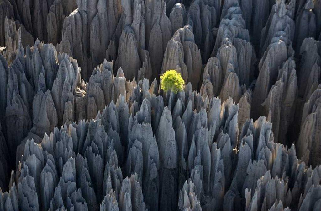 Madagaskar kamenny les
