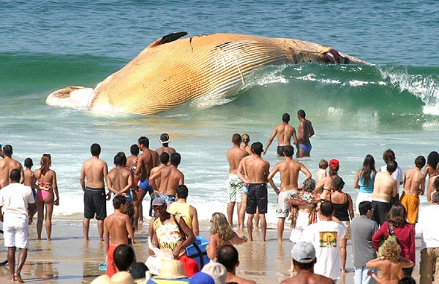 velryba na pláži