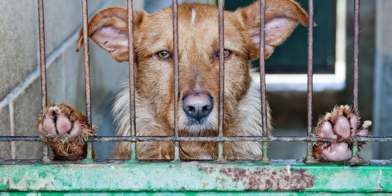 První země v Asii zakázala jíst psy