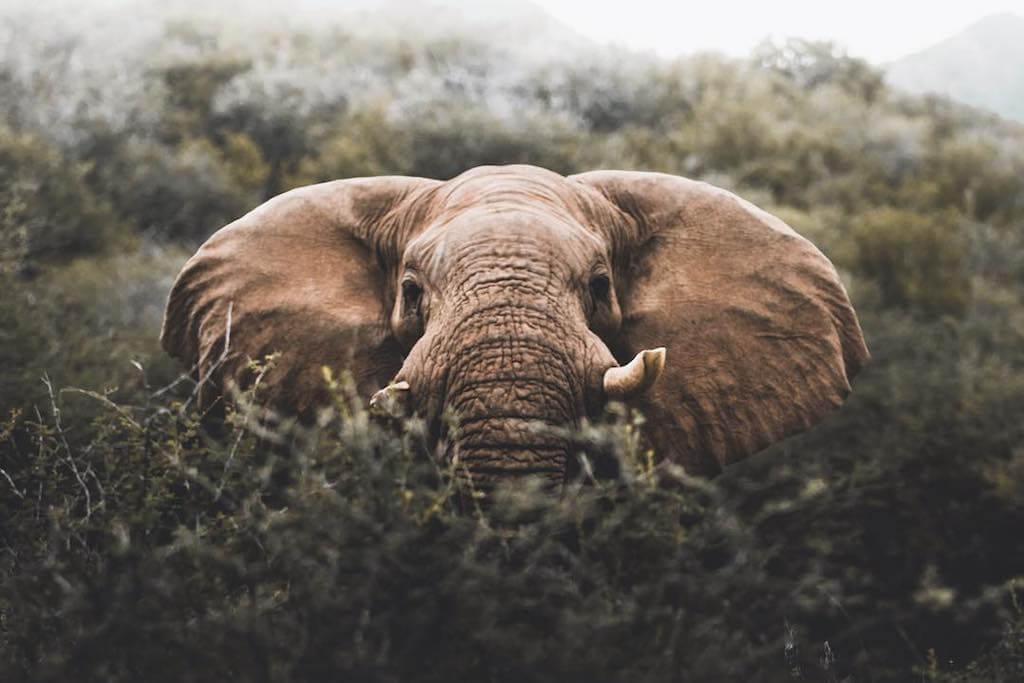 Tento mladý nadaný fotograf fotí krásné netradiční fotky divokých zvířat