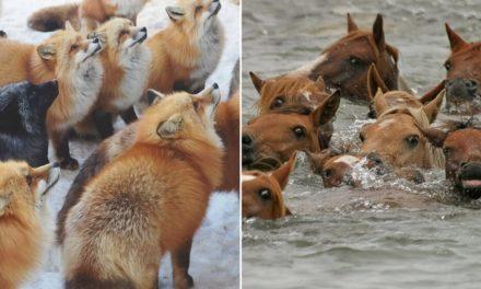 7 neuvěřitelných míst, na kterých zvířata vyhrála nad lidmi