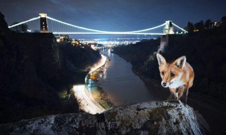 Tento fotograf fotí divoká zvířata v evropských městech