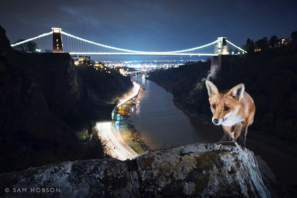 Tento fotograf fotí divoká zvířata v evropských městech4 minut čtení