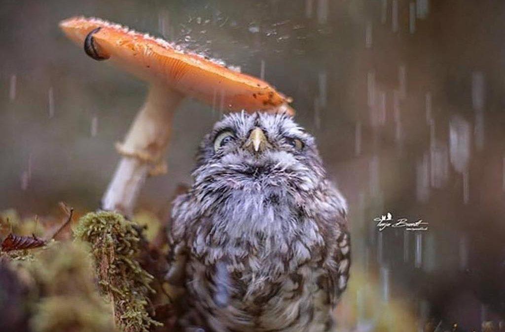 21 úžasných fotek zvířat zachycených v ten nejlepší okamžik