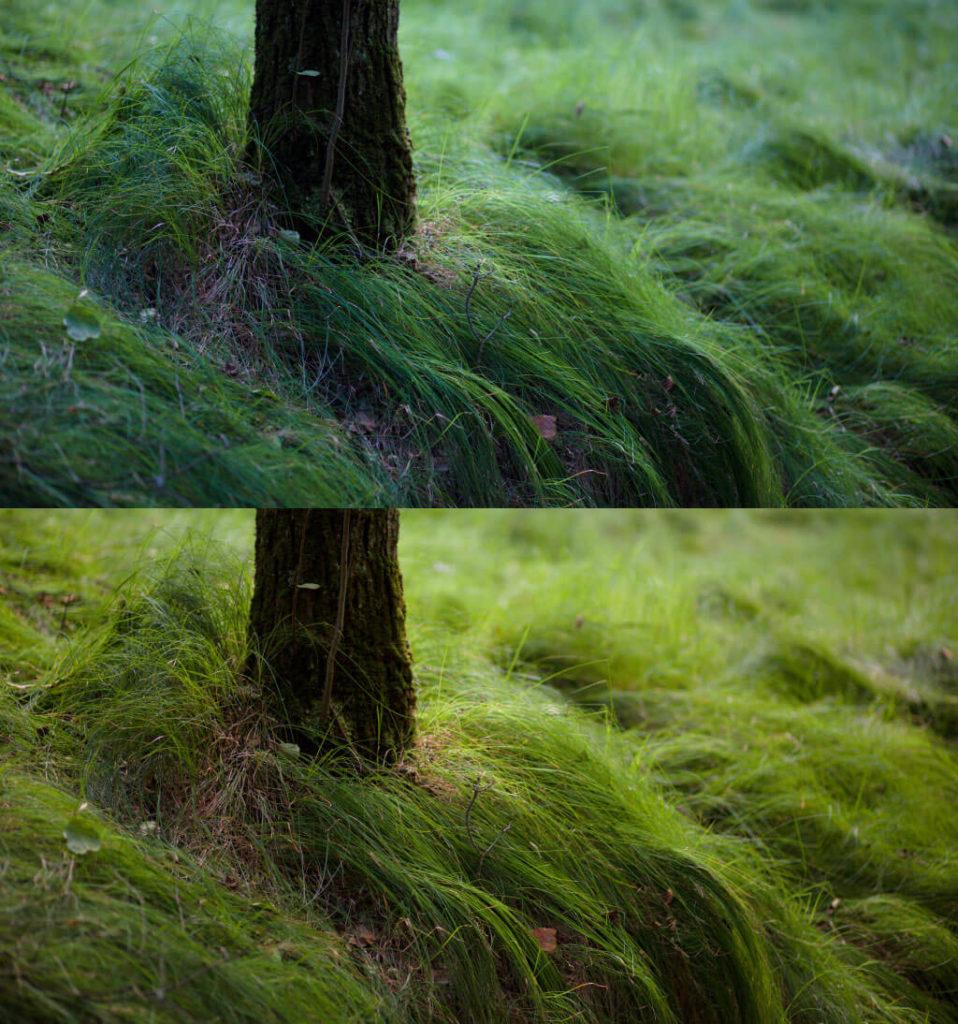strom_a_trava