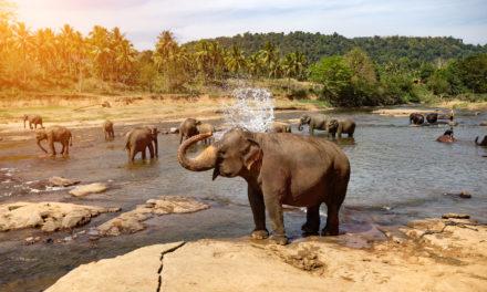 Objevte krásy Srí Lanky aneb zajímavosti a tipy pro cestovatele