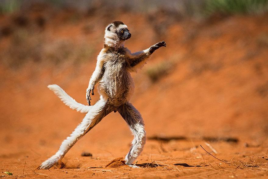 21 nejvtipnějších fotek zvířat, kterým se budete nahlas smát5 minut čtení