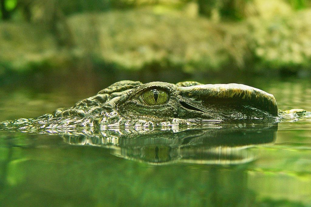 Mexiko, tajemná země krokodýlů