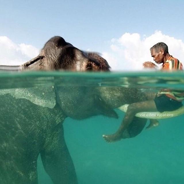 neskutečné fotky lidí a zvířat