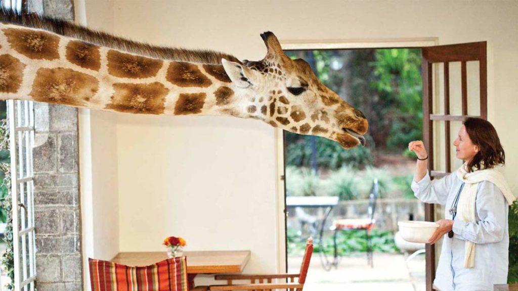 Feeding-Time-at-Giraffe-Manor