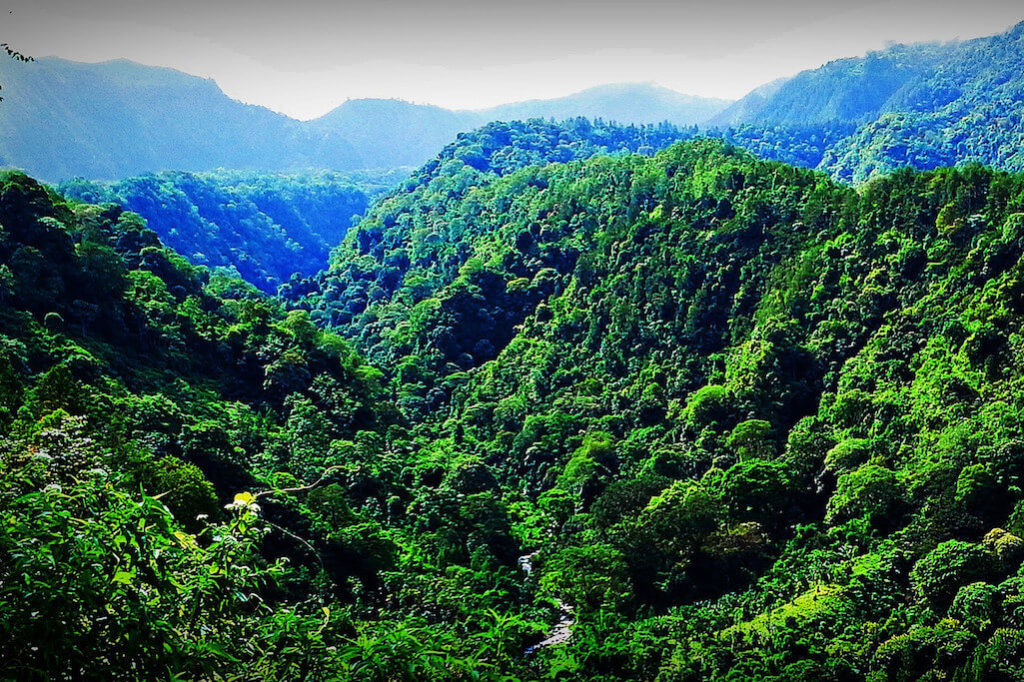 Nigérie masivně kácí své vzácné pralesy. Kdo za tím stojí?5 minut čtení