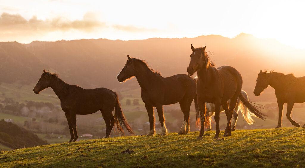 Nový Zéland je země kovbojů a divokého rodea6 minut čtení