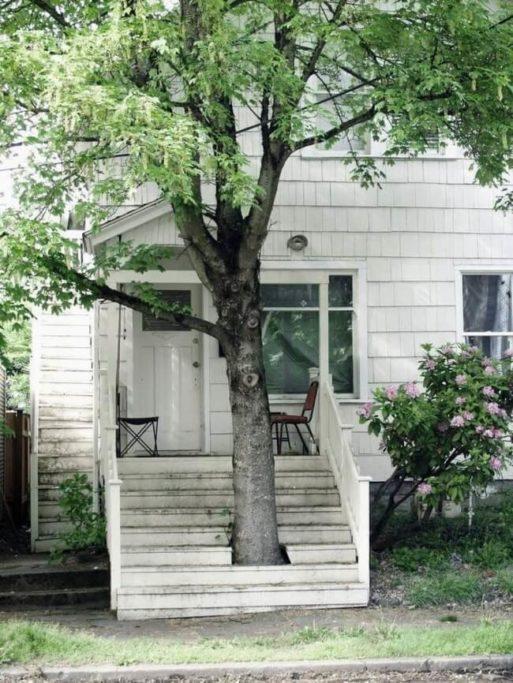 strom v domě