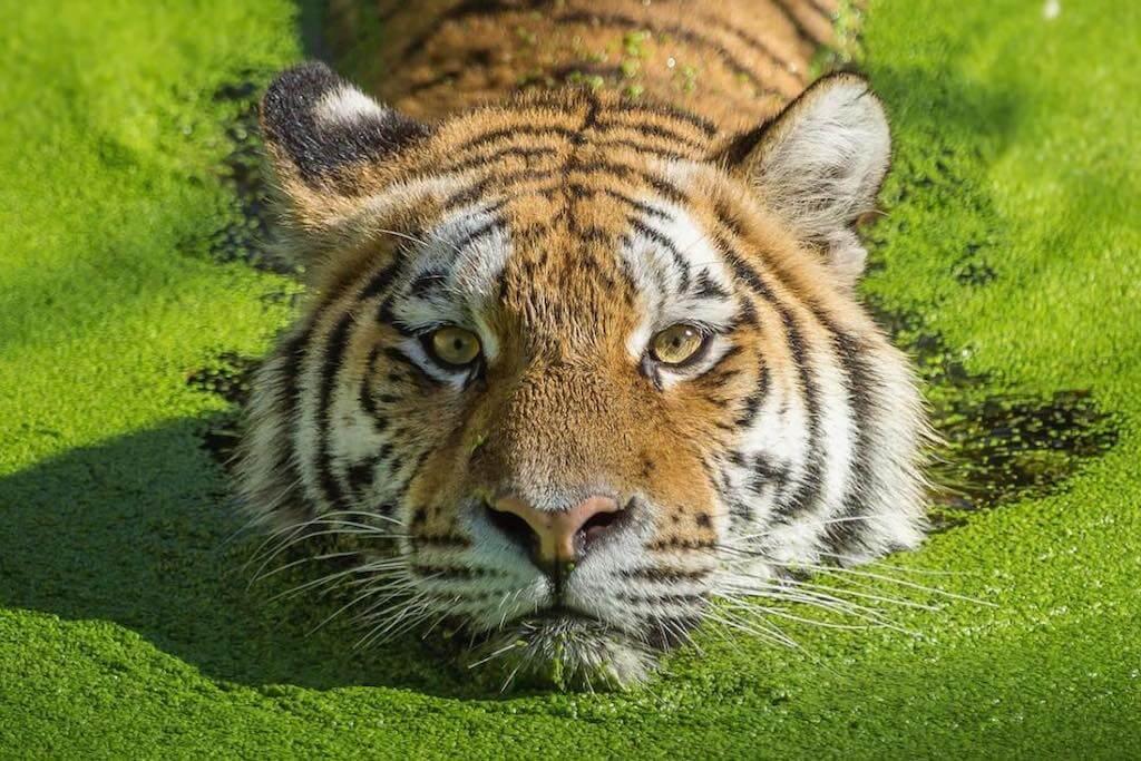 20 nejpovedenějších fotek divokých zvířat v historii fotografie3 minut čtení