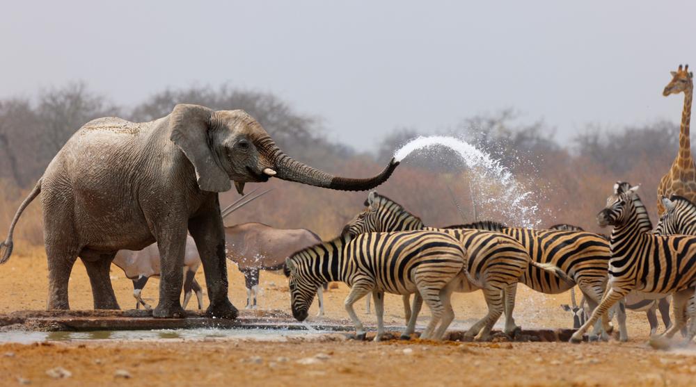 20 nejpovedenějších fotek divokých zvířat v historii fotografie