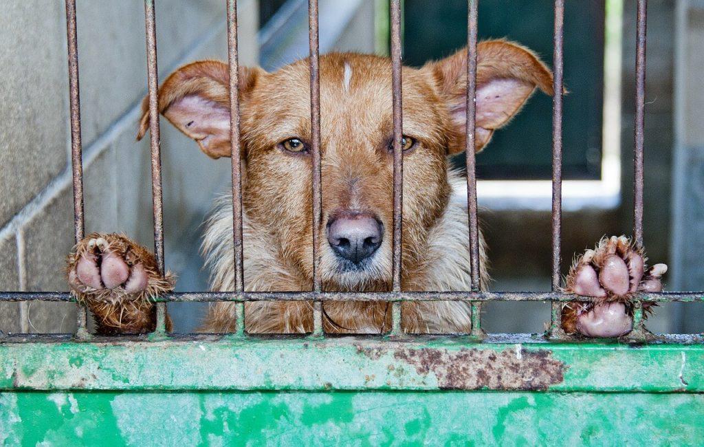 První země v Asii zakázala jíst psy2 minut čtení