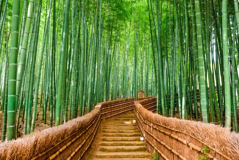 Bambusovy les Japonsko