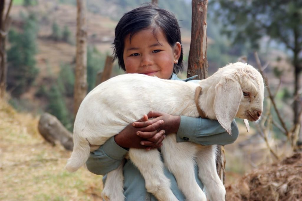 nepal-dite-ovecka