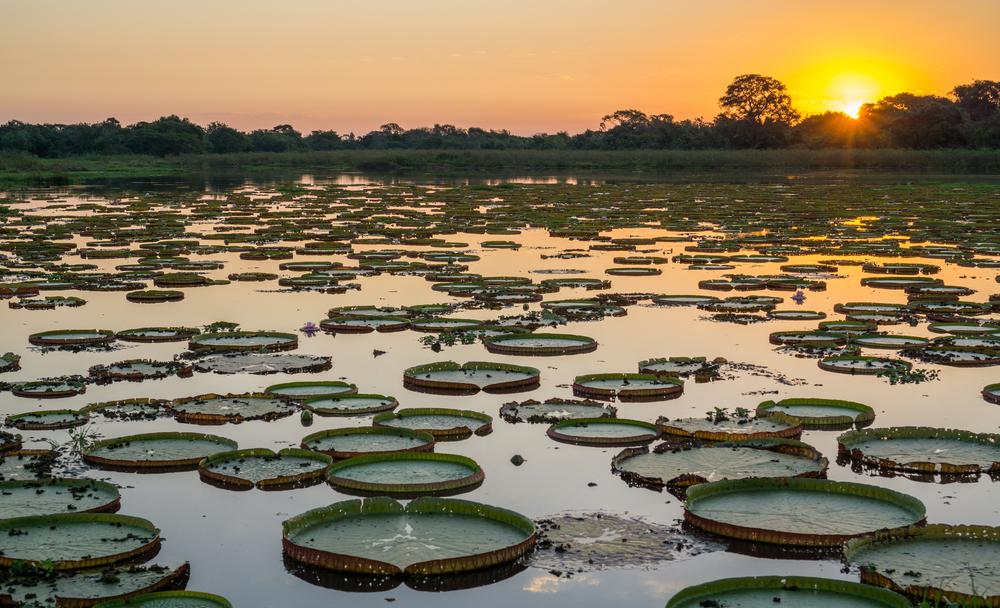 Pantanal lekniny