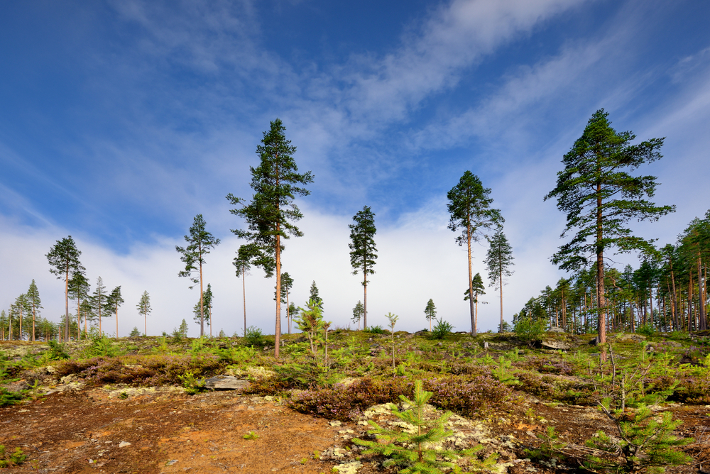 uhlíkové stromy zdarma online datování jacksonville