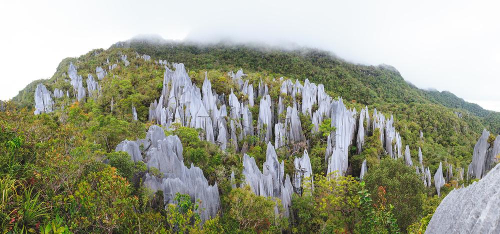 Gunung Mulu, Borneo