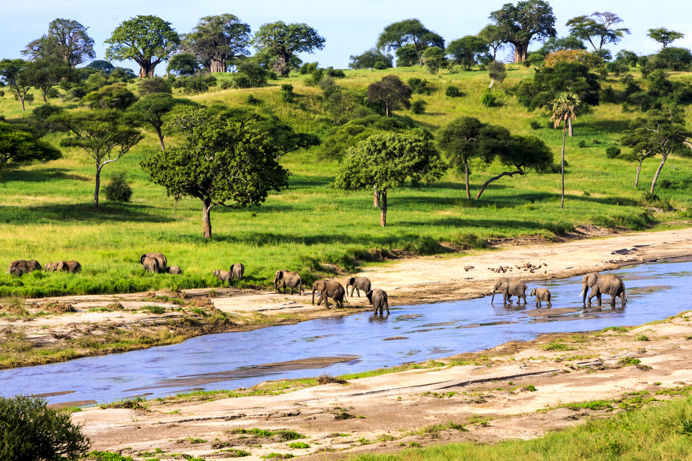 safari v Tanzánii