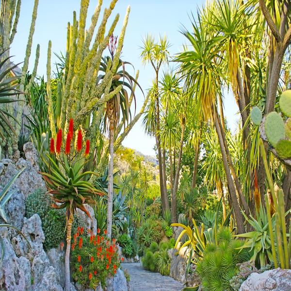 Exotická botanická zahrada Monako