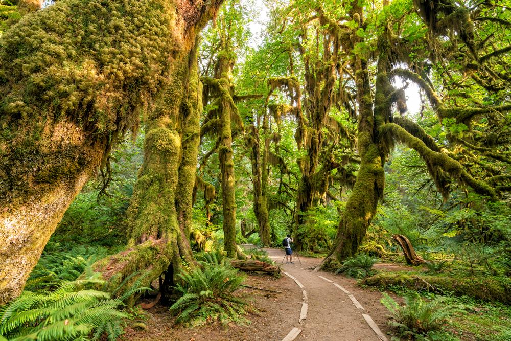 Olympijský národní park Washington
