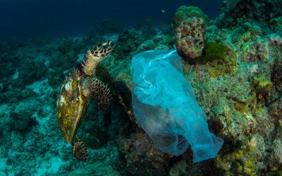 5 jednoduchých tipů, jak používat méně plastu na cestách