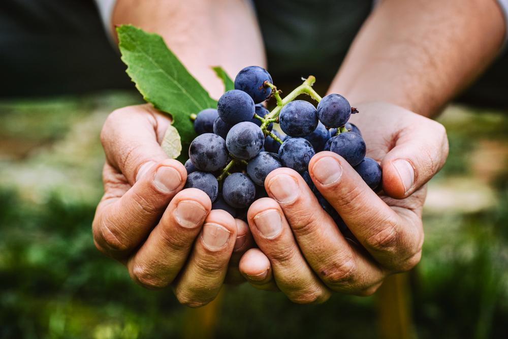 Podzimní procházka moravskými vinicemi
