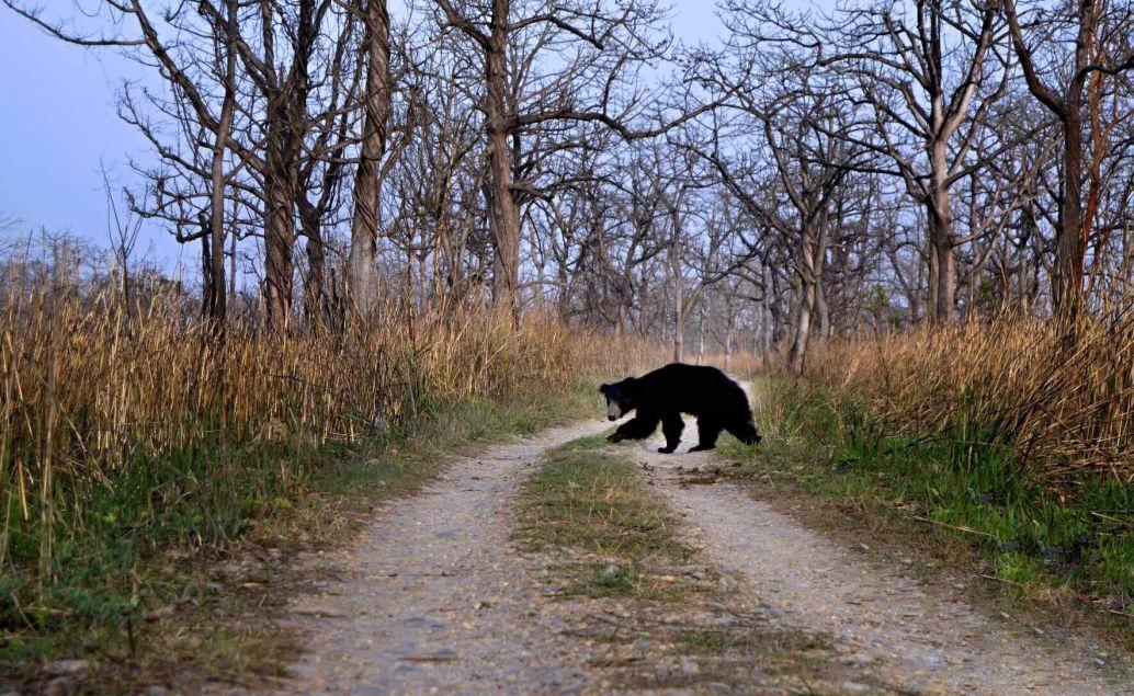 pěší safari medvěd