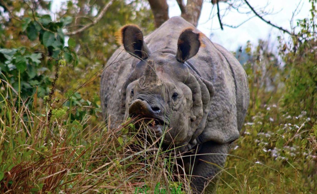 pěší safari nosorožec