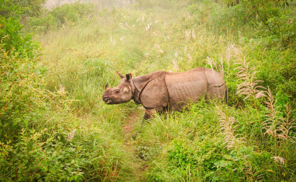 pěší safari nosorožec 2