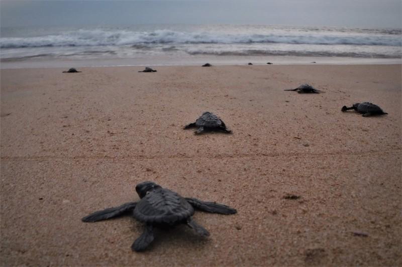 Srí Lanka želvy