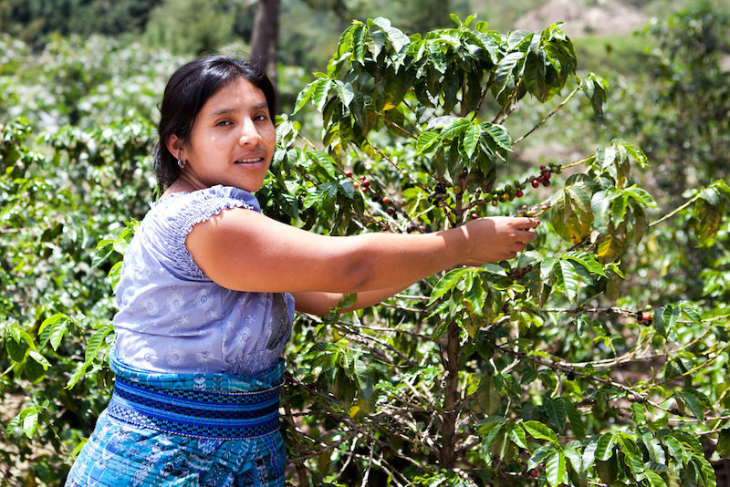 Voňavou cestou kávy; 5 zemí, kde tomu rozumí
